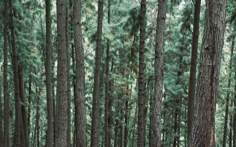 Dwie główne wady mebli z drewna sosnowego.