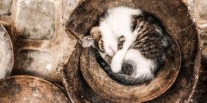 Bezsenność, czyli co się stanie jak długo nie śpimy?