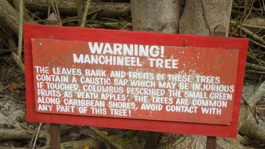 toksyczne drzewo